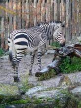 Zoo Rlp