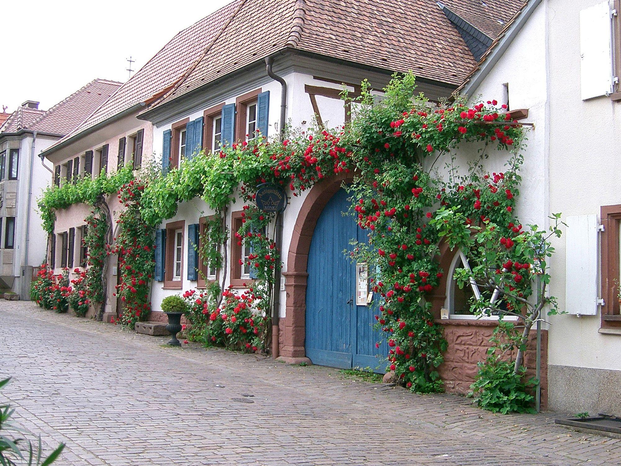 Heimat Und Blütenfest In Rhodt Unter Rietburg
